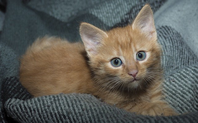 Apakah Memelihara Kucing Sunnah?