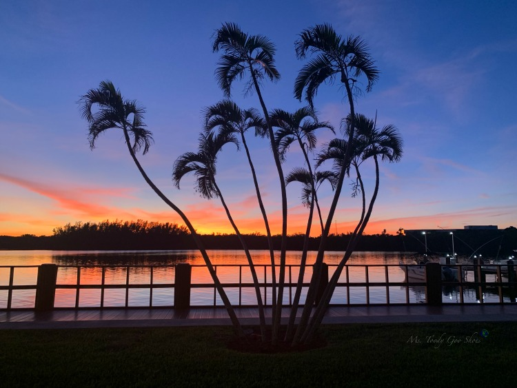 Florida Sunsets | Ms. Toody Goo Shoes Photo Diary