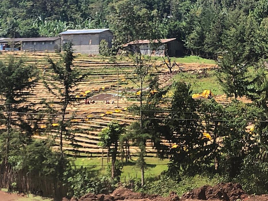 Podróż po Etiopii - część 14 - W stronę Yabello i ku dolinie Omo