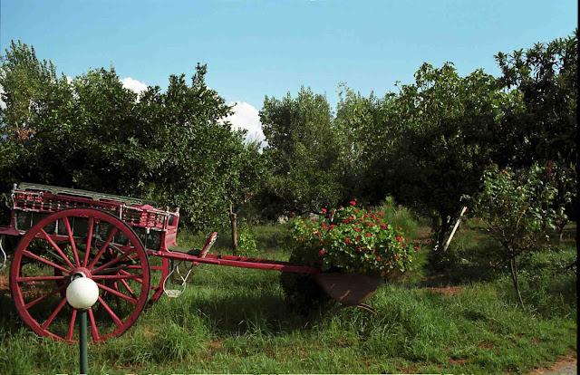 Αποτέλεσμα εικόνας για Φυσική φάρμα