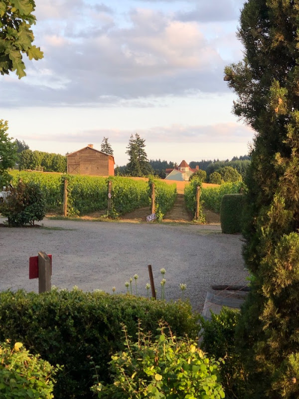 Alloro Vineyard evening view