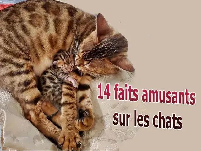 14 faits amusants sur les chats
