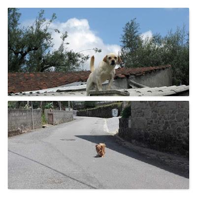 Cães na rua e no muro de uma casa