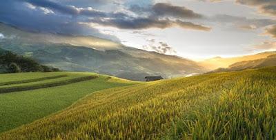 ما معنى رؤيا المزرعة في الحلم، تفسير رؤية الزرع والمزرعة في المنام بالتفصيل