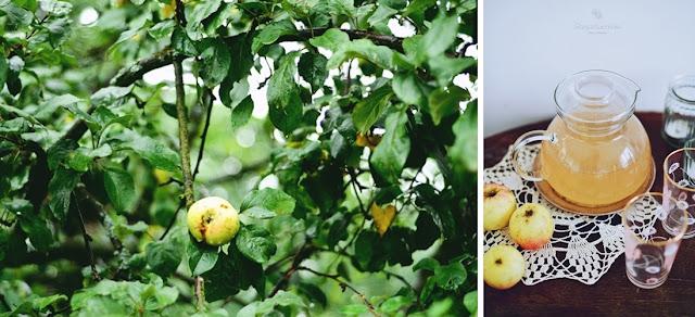 Kompocik z jabłek