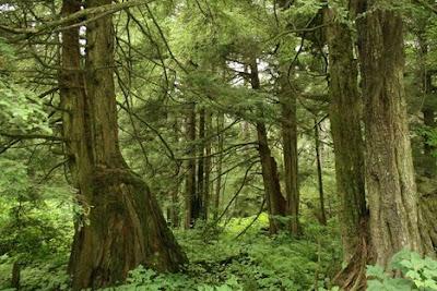 Causa disboscamento: agricoltura fabbisogno legname