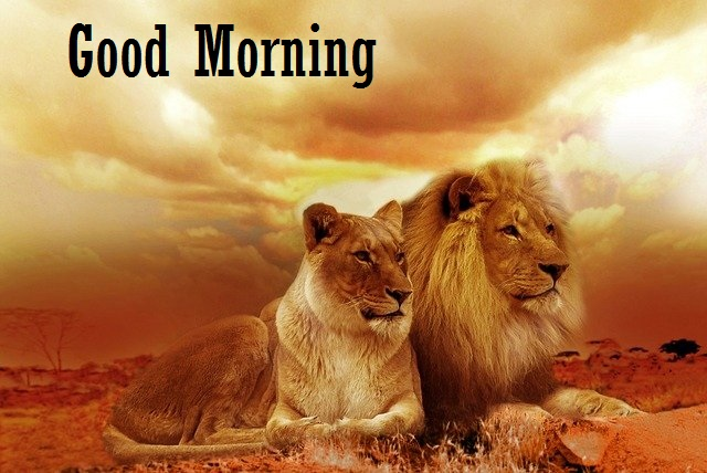 good morning animals images