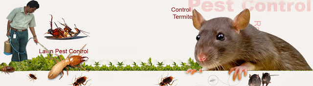 ارخص شركة مكافحة الحشرات بالدمام والخبر