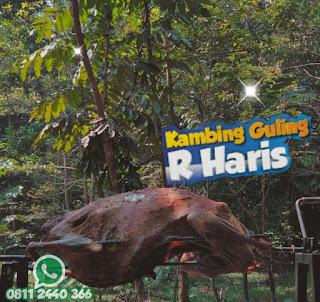 Kambing Guling Arcamanik Bandung, kambing guling arcamanik, kambing guling,
