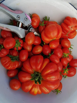 Bowl of tomatoes, life on pig row