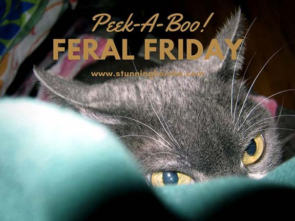 Feral Friday: Peek-A-Boo!
