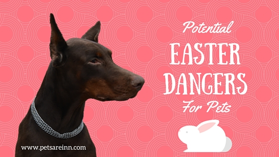 Easter Pet Dangers
