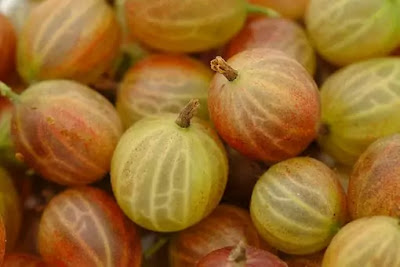 Uses of Gooseberry