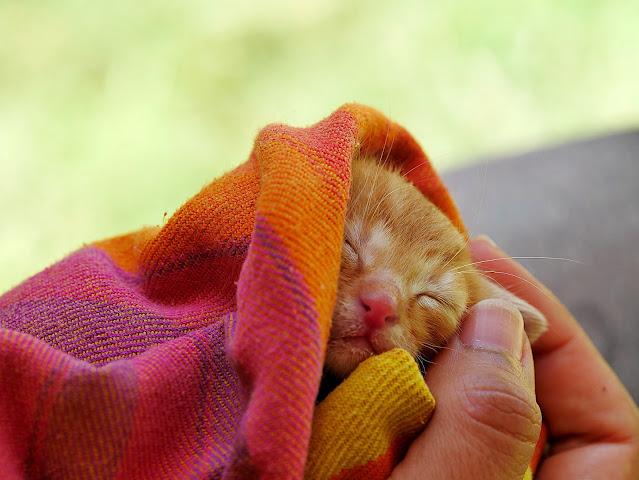 Cat Health Insurance Basics