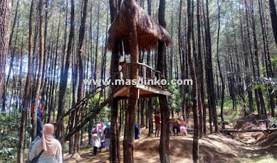 Wisata Hutan Pinus Haurgeulis Majalengka