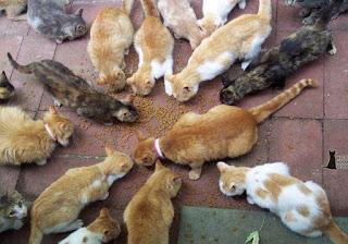 Solusi Kucing Tidak Mau Makan Whiskas Atau Dry Food