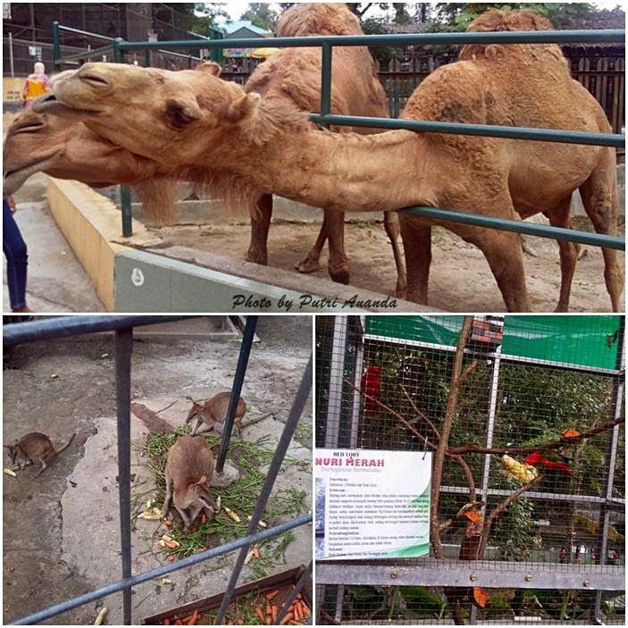 Siantar Zoo