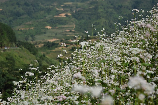 Vietnam top destinations for travel in December the heaven for flower lovers