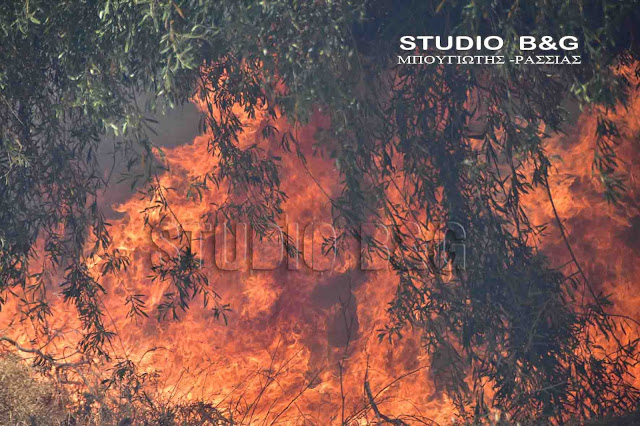 Αργολίδα: Πυρκαγιά στο Παναρίτι