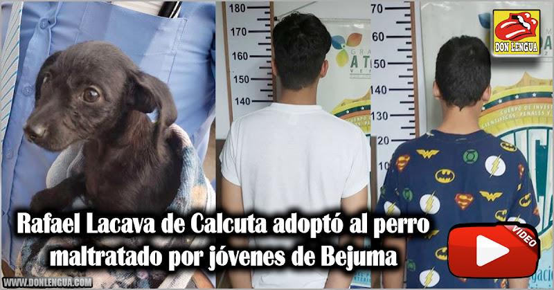 Rafael Lacava de Calcuta adoptó al perro maltratado por jóvenes de Bejuma