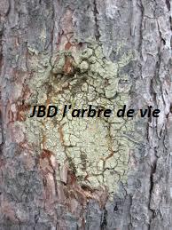 comment réagissent vos arbres face aux blessures ?