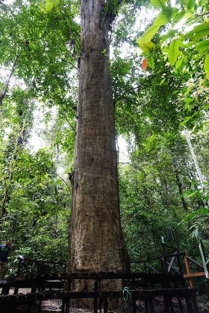 9 Tumbuhan Langka di Indonesia yang Terancam Punah
