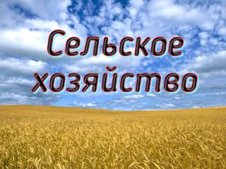 Бизнес идея - сельское хозяйство