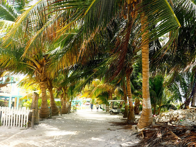 Sand path lined with palm trees on Caye Caulker, Belize