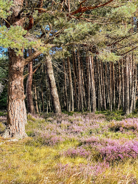 native scottish woodland, highlands, scotland by rail part 5, the best of the highlands, mandy charlton photographer, writer, blogger