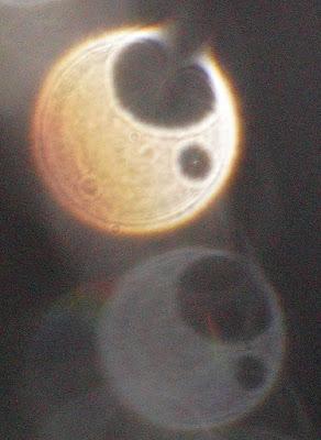 orb motif