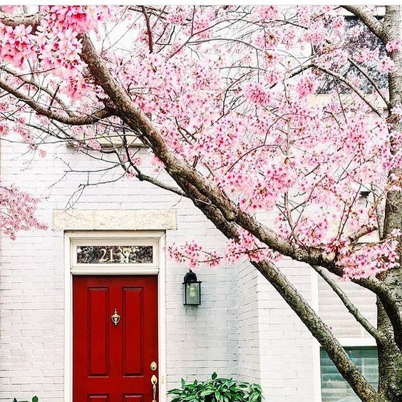 Cherry blossoms, white brick and red door beautiful home exterior seen on Hello Lovely Studio