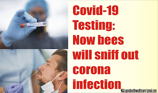 Covid-19 Testing: Now bees will sniff out corona infection in seconds!