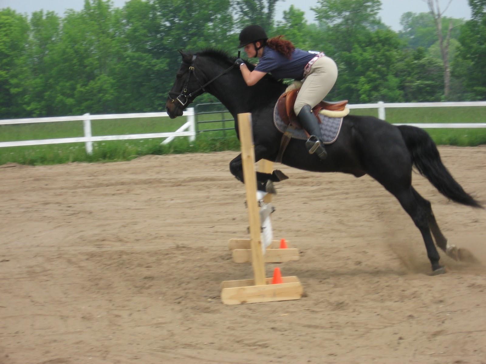 black a horse has - photo #35