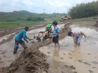 Introduce children to paddy field