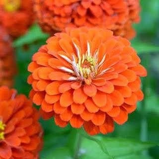 arti bunga berwarna jingga