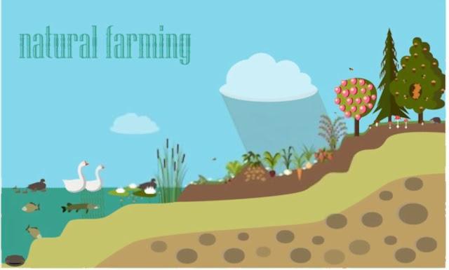 Natural farming Permaculture versus Agriculture