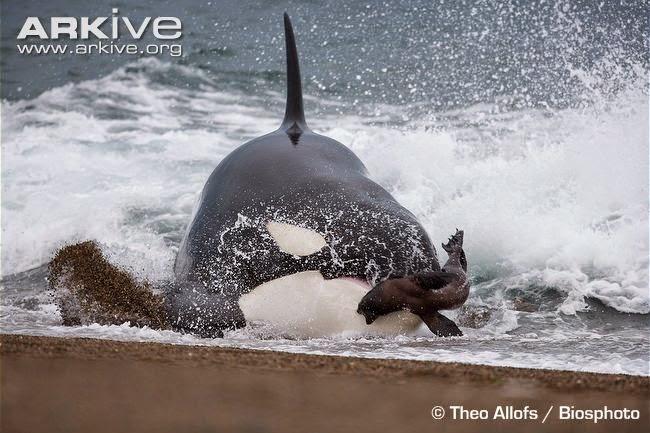 interactions between marine mammals