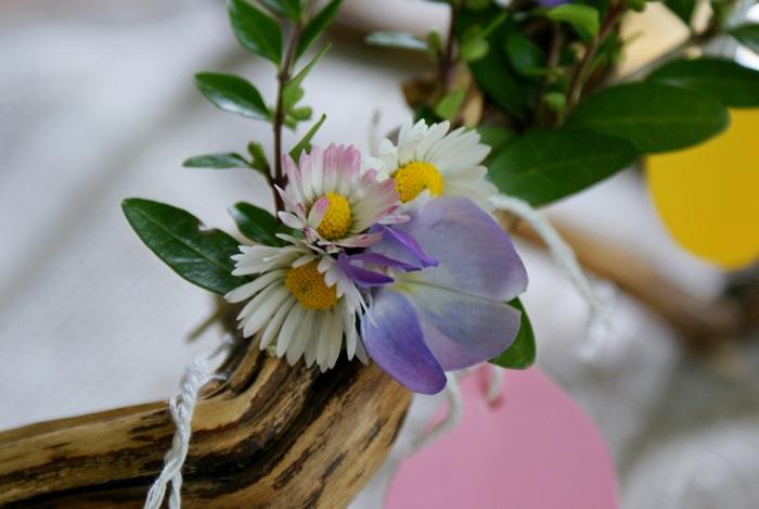 daisies margherite spring primavera