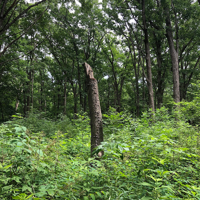 The dense forest of Lyons Woods enchants.