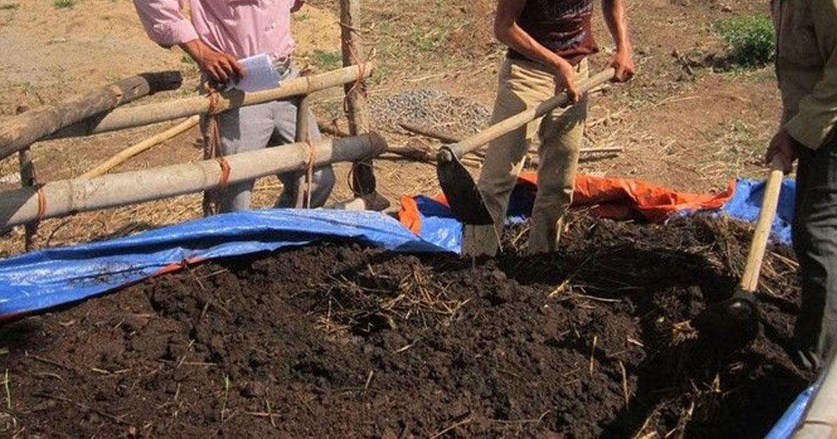 Xử lý chất thải chăn nuôi bằng ủ phân hữu cơ (Compost)