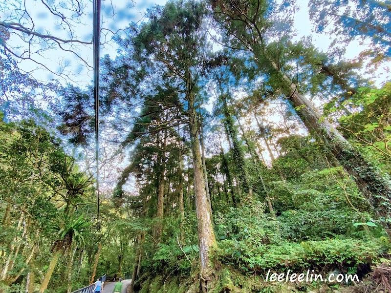 滿月圓國家森林遊樂區|三峽森林芬多精景點~再訪發現園區變得煥然一新