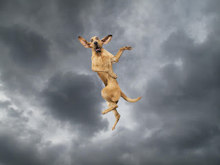funny dog flying through the air in a storm picture