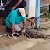 Vídeo: jacaré surge em igarapé e assusta moradores do bairro da Paz