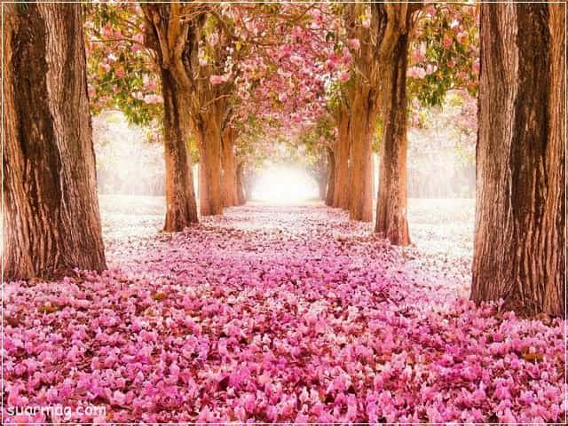 صور خلفيات - خلفيات ورد 4   Wallpapers - Flowers backgrounds 4