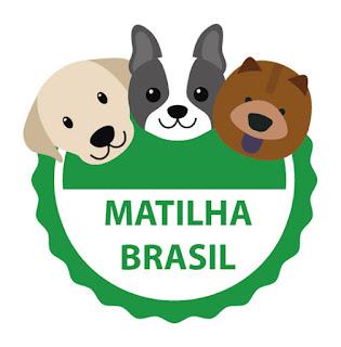 CURSO ONLINE  ACADEMIA DA MATILHA
