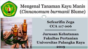 Tanaman Kayu Manis merupakan salah satu jenis tanaman rempah-rempah yang dibudidayakan dan biasanya tumbuh di daerah penggunungan dengan tinggi 1–12 m. Selanjutnya Emilda (2018) mendefinisikan kayu manis sebagai tumbuhan berkayu yang dikenal sebagai rempah-rempah dan termasuk di dalam genus Cinnamomum dengan famili Lauraceae. Denian (1996) melaporakan bahwa tanaman kayu manis dengan spesies Cinnamomum burmanii sudah lama dikenal dan dikembangkan di Indonesia sebagai salah satu komoditi rempah yang menjadi barang perdagangan utama sejak zaman kolonial.
