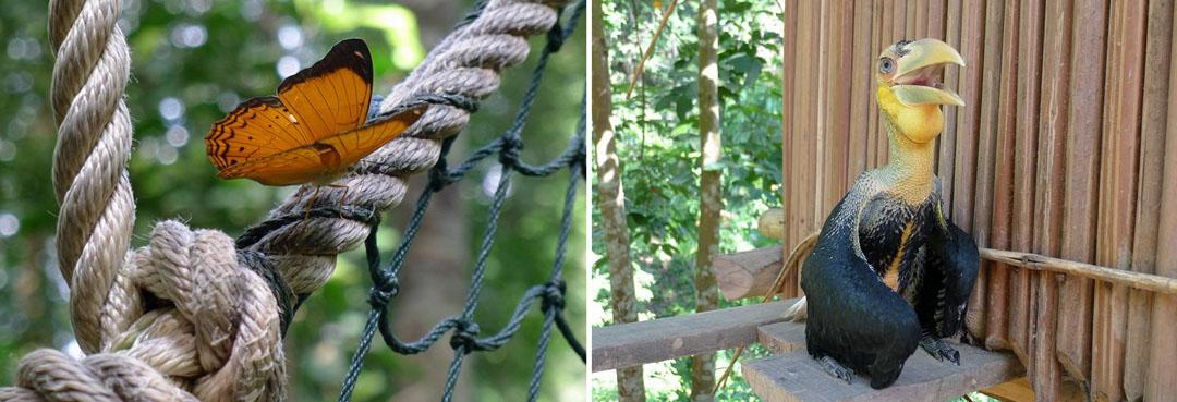 Terokai Hidupan Liar di Taman Negara
