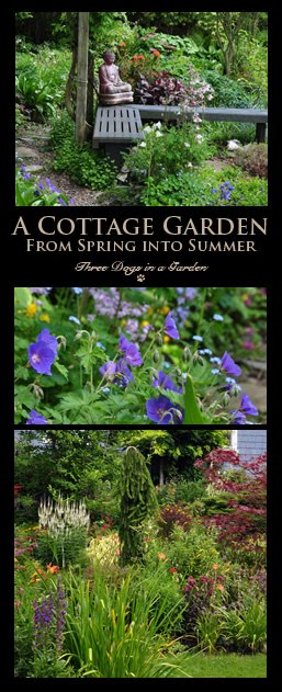 Jacquie's Garden, Part 1: Spring into Summer