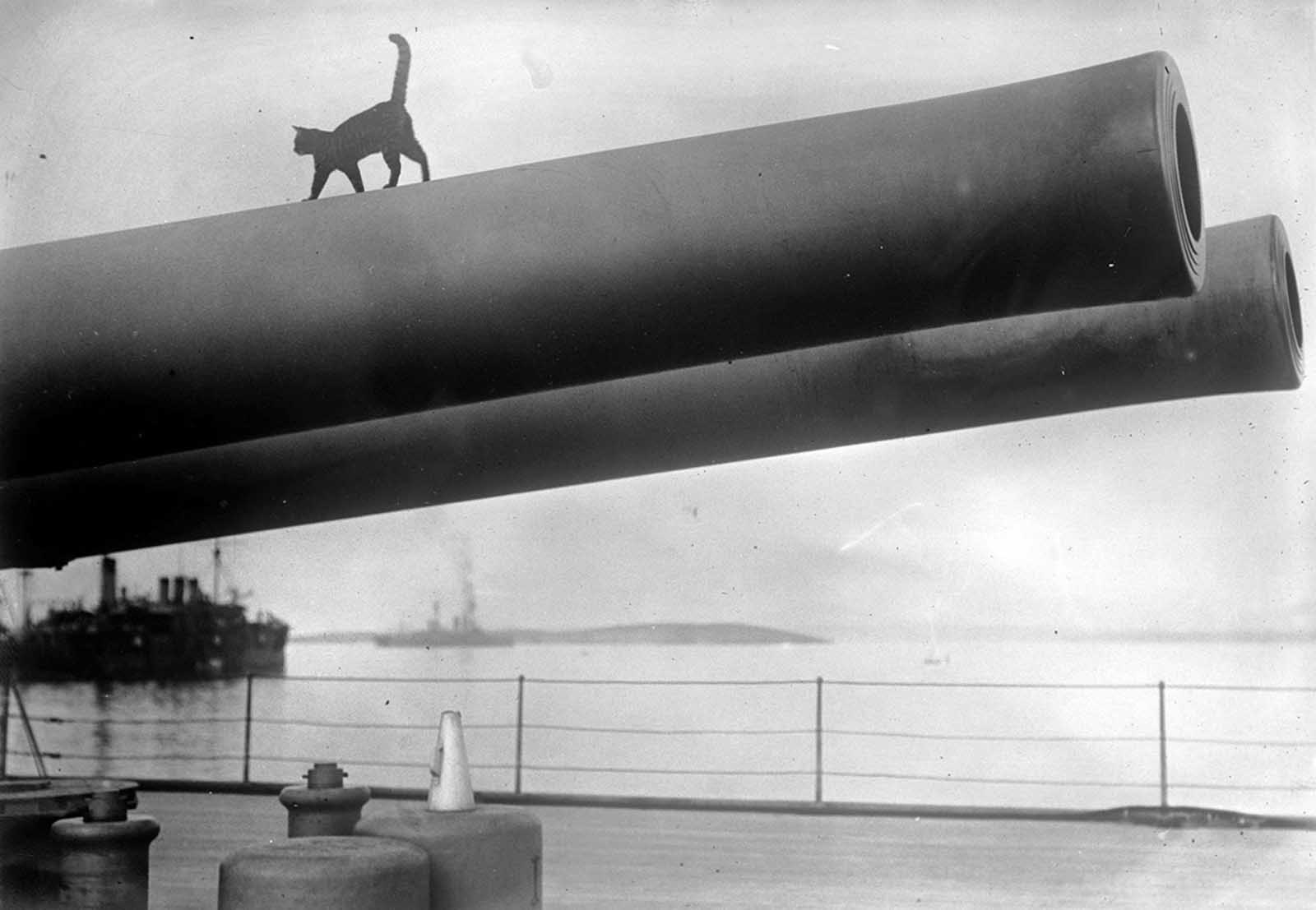 A cat, the mascot of the HMS Queen Elizabeth, walks along the barrel of a 15-inch gun on deck, in 1915.