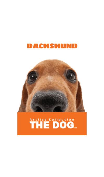 THE DOG Dachshund 2